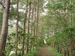 silveroak-garden